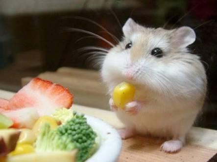 朝ごはん食べるときの格好は?