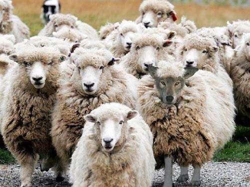 """羊の皮をかぶった狼だった!? 肉食系女優・吉田羊に""""女帝""""が激怒でジャニーズから共演NG指令!"""