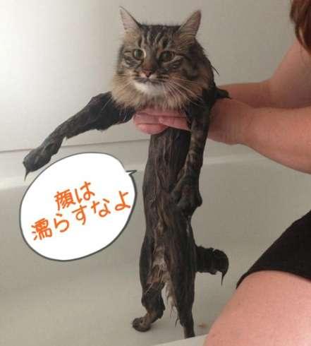 お風呂が嫌いな人!