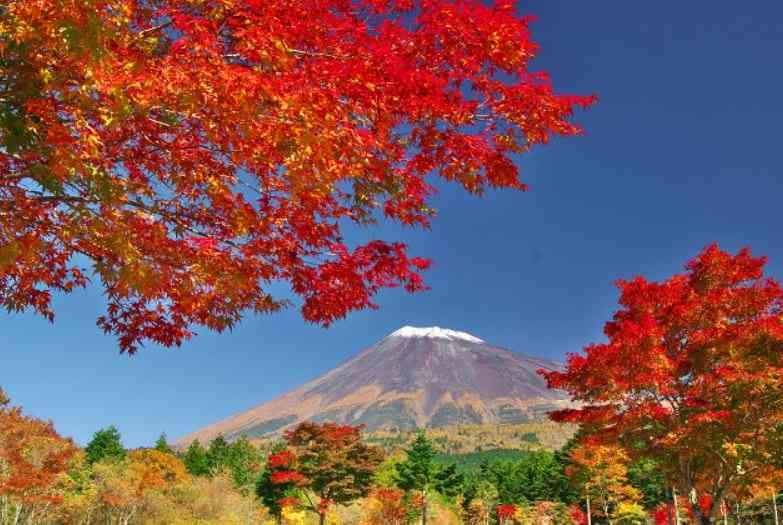 日本が海外に誇れるものは?