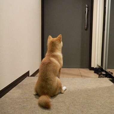 帰宅した時のペットの反応は?