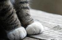 ネコの爪とぎで駄目になった高かった物