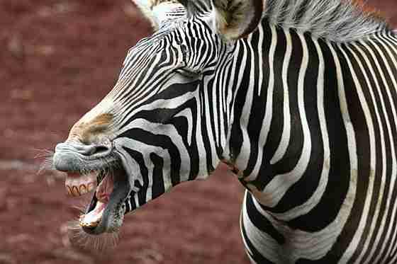 【画像】人間っぽい動物達