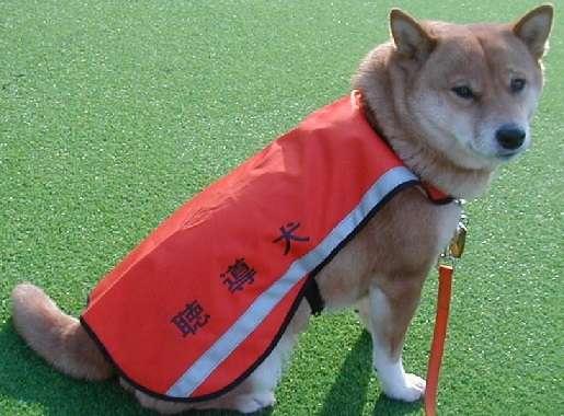 盲導犬「汚れる」と乗車拒否…運輸局、タクシー会社処分