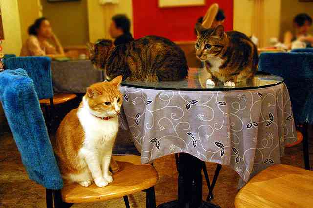 ガルちゃん猫カフェ☆4号店オープンしました♪