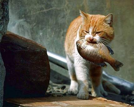 子猫が仲間になりたそうにこちらを見ているそのポーズがせつなすぎて拒否権なし。瞬速お持ち帰りしました。