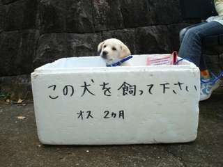 野良犬について