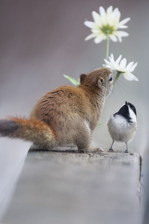 【画像】リスの画像が集まるトピ【動物】