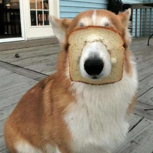 パンの耳活用法