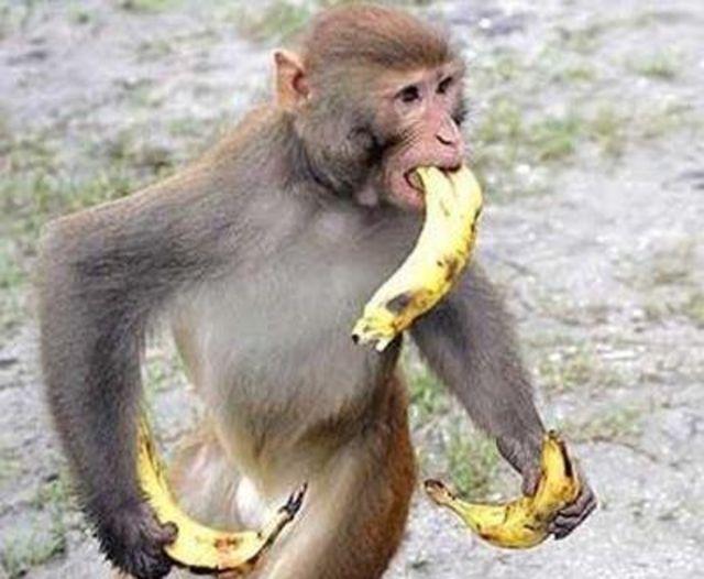 バナナが食卓から消えるおそれ 病気の感染拡大