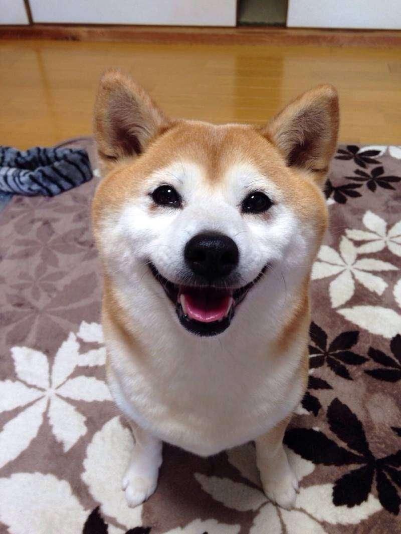 愛犬見せて下さい