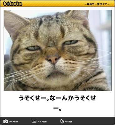 表情豊かな画像を貼るトピ