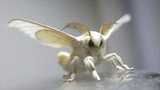 【閲覧注意】もし虫の世界にガルちゃんがあったら立ちそうなトピ