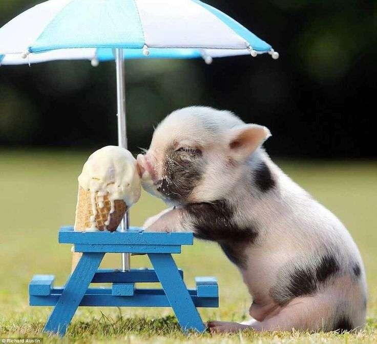 夏を感じる動物たちの画像が集まるトピ