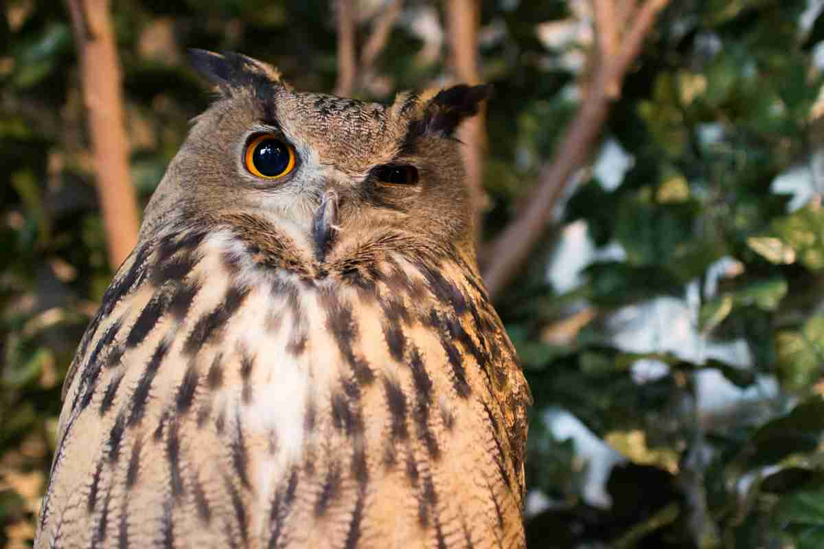 フクロウの画像 p1_20