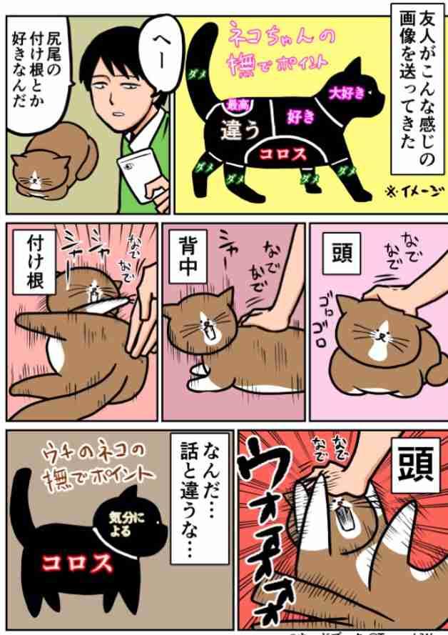 お宅の猫は抱っこ好きですか?