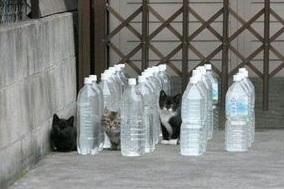 庭に来る野良猫対策