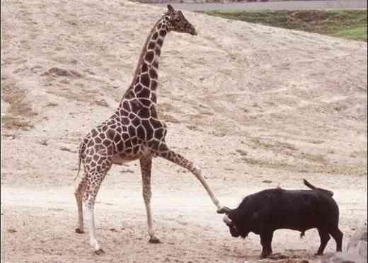 あまり見掛けない動物画像
