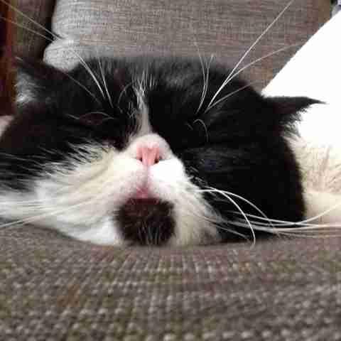 画像を見てフフッてなったら寝るトピ
