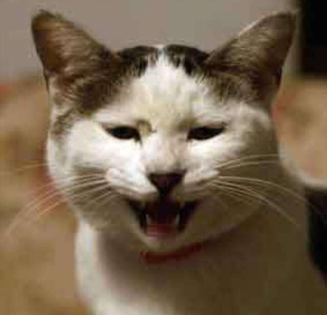 塩対応猫をお持ちの方