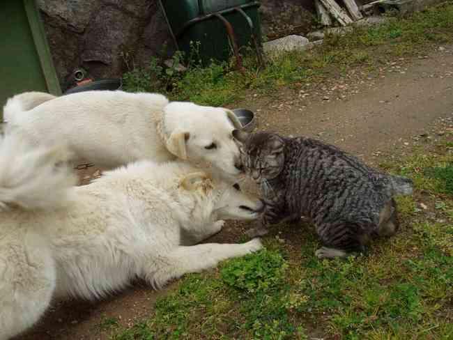 犬と猫どちらも好きな人が集まるトピ♡