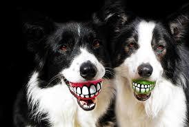 愛犬との家での遊び方