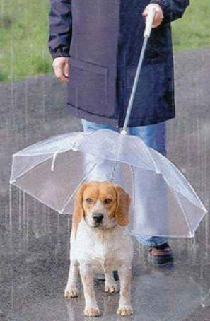 雨の日きらいじゃない人