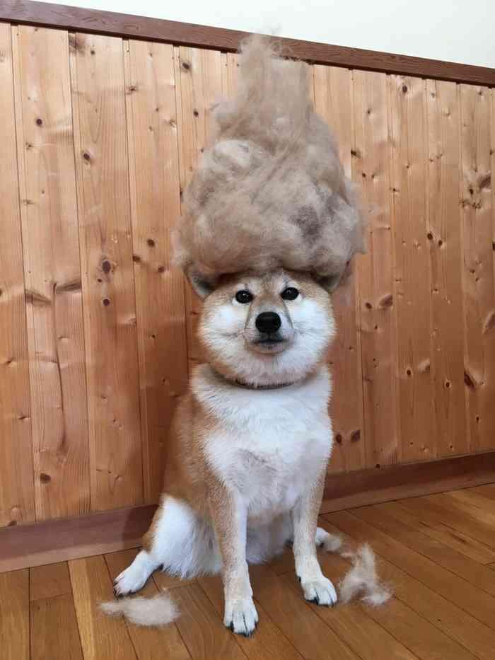 抜け毛、気になりませんか?