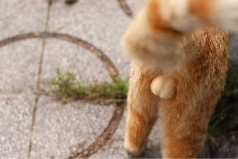 茶トラ猫好きな人あつまれ~