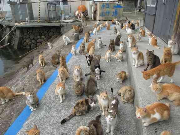 「猫の島」2日間で117匹を一斉不妊手術「世界で一番ねこにやさしい島」