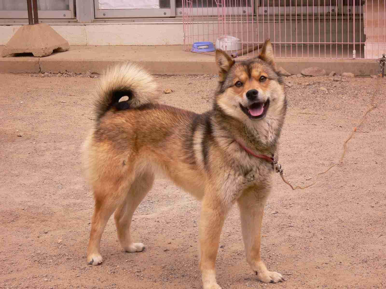 日本犬に癒やされるトピ