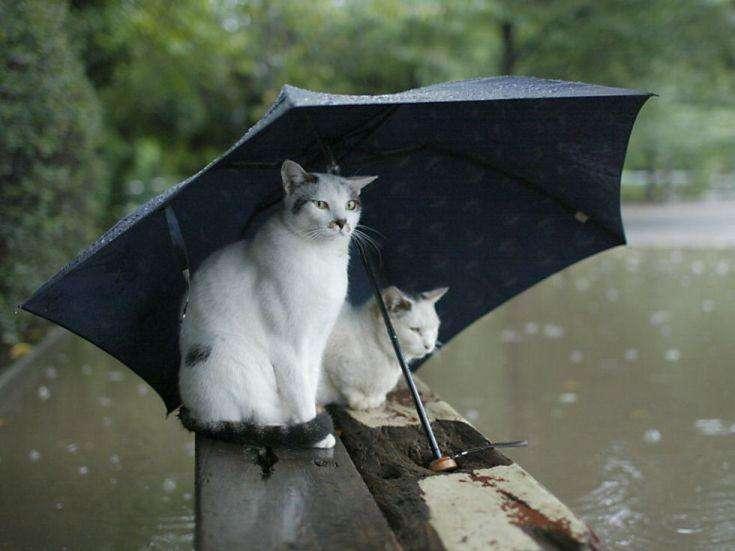 雨の日が楽しみになるアイテム