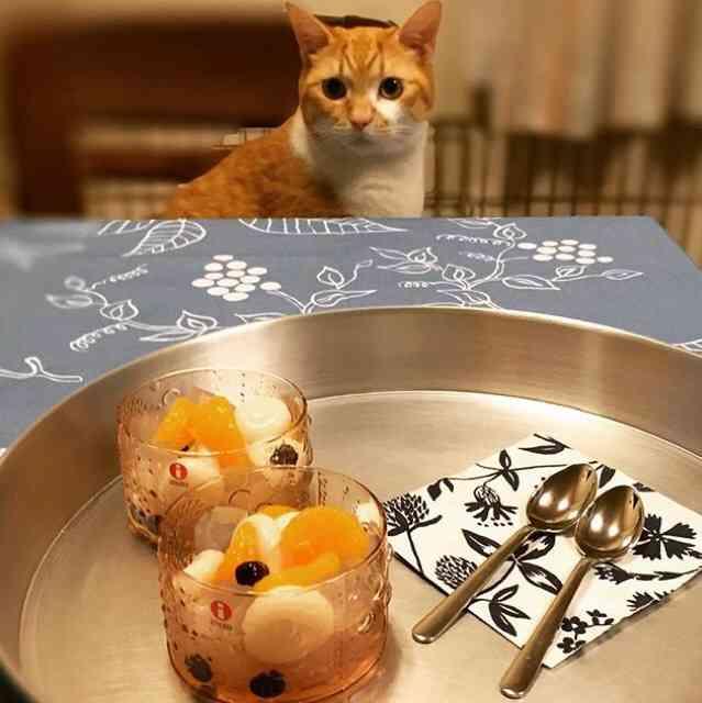 ガルちゃん猫カフェ6号店 兼 私立ガル猫学院
