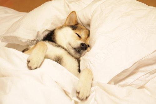 短時間睡眠