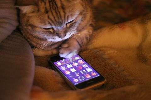 PC、携帯、スマホ、タブレットに言いたい事