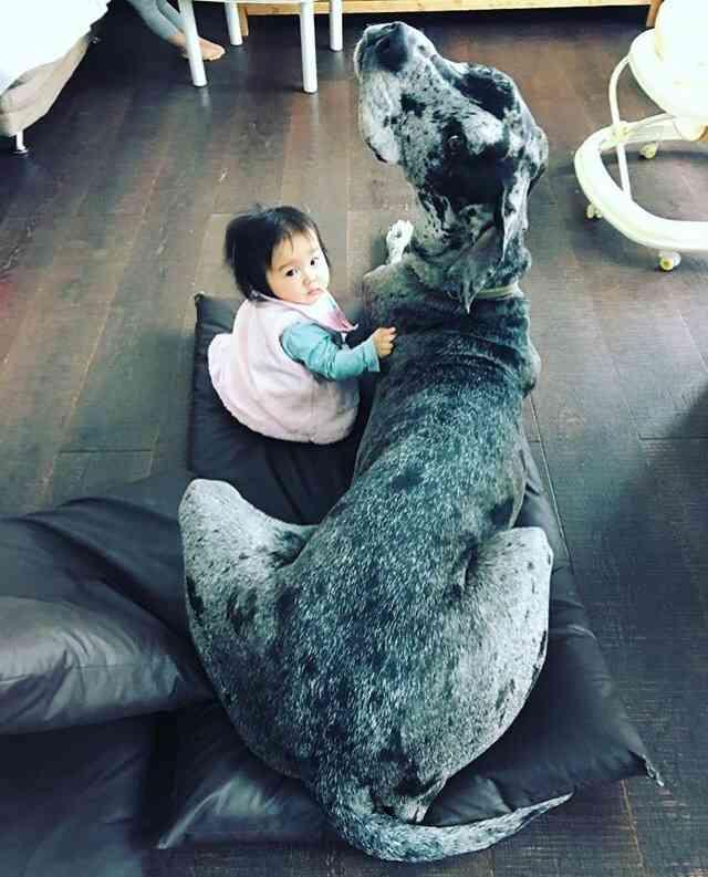 子供×動物の画像ください!