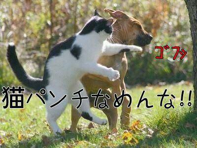 サバトラ猫好きな人集まれ~