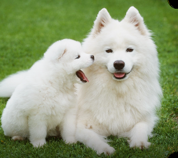 大型犬好きさん集まれ〜〜