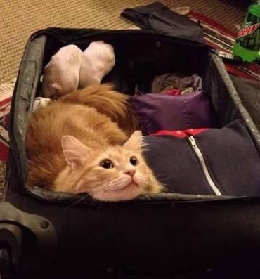 旅行の時のかばん