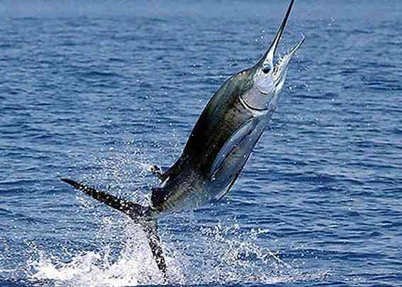 魚になるなら何になりたいですか?
