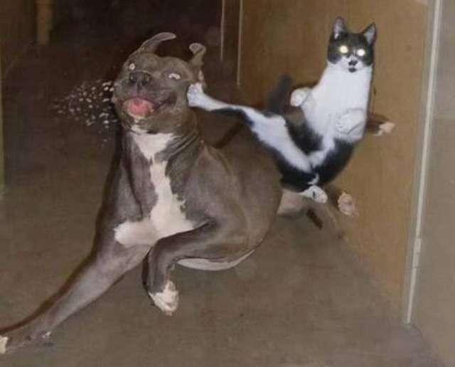 ネコのトイレ事情に悩んでる人!