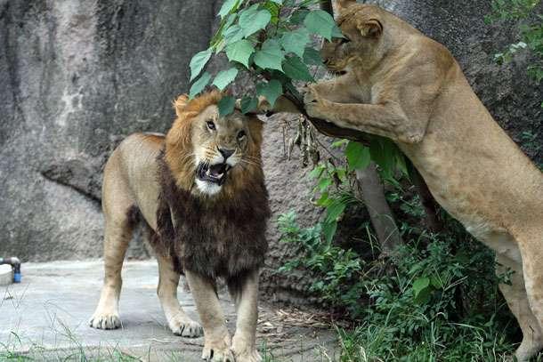 かわいい動物の画像を貼ろう