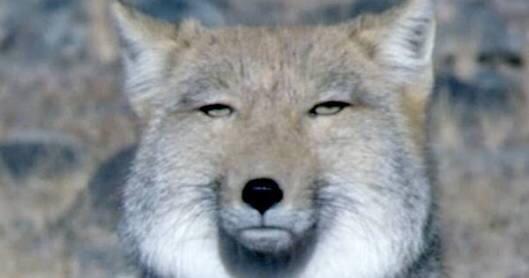 自分と似ている動物の画像を貼るトピ