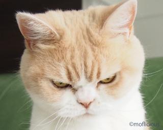 怒りで震えてる画像ください!