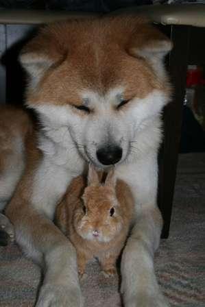 他人とは思えないのよねぇ。種は違えども色柄が似すぎていて仲良しな動物たち