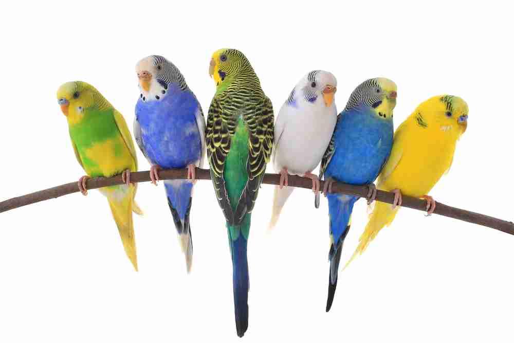 鳥が嫌いな人