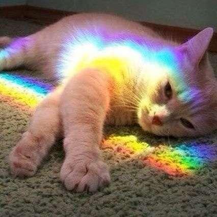 綺麗な虹の画像!