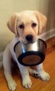 ペットのご飯を手作りしてる人!