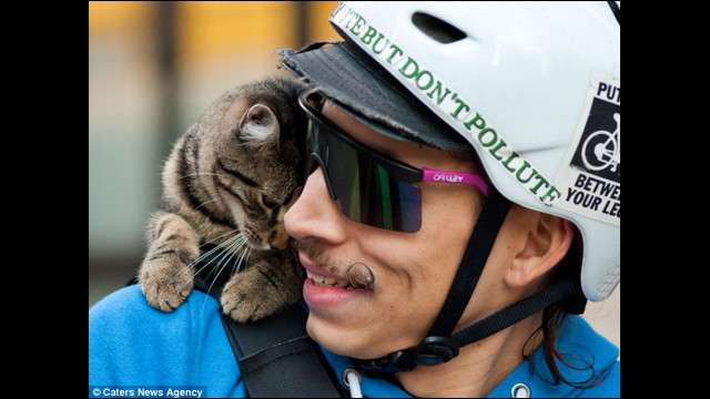 ノーヘルで原付に乗るネコのとんでもない姿がFacebookで話題に