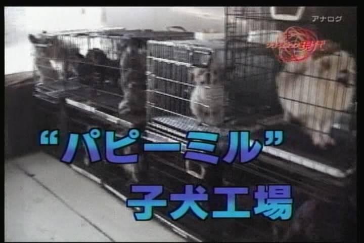 保護犬・猫を飼われている方